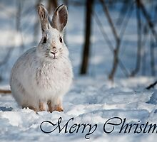 Snowshoe Hare Christmas Card 1 by Michael Cummings