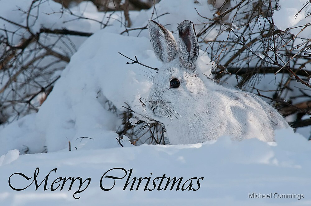 Snowshoe Hare Christmas Card 3 by Michael Cummings