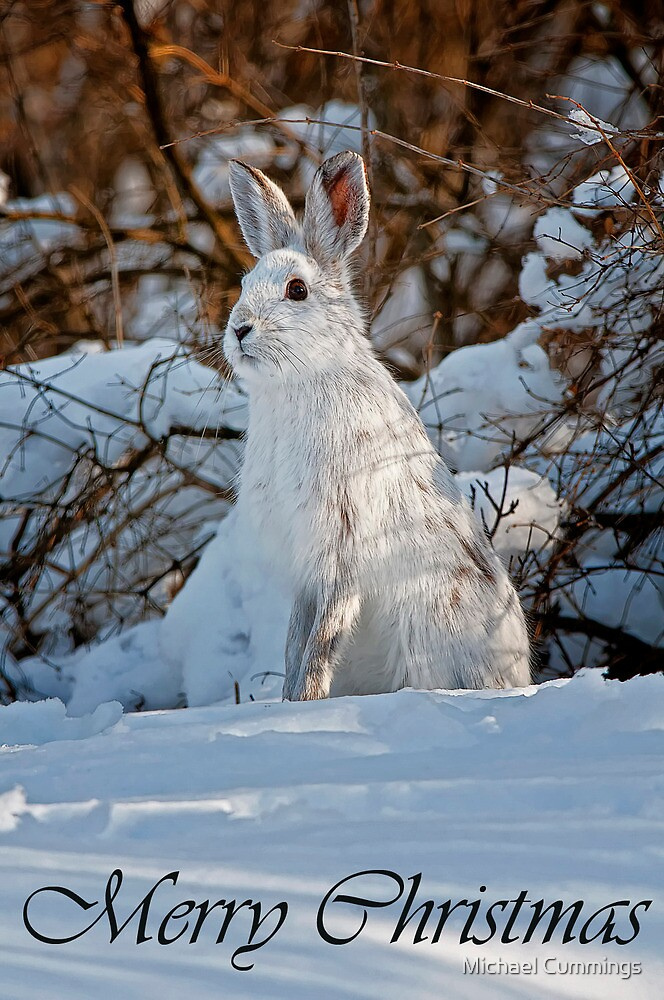 Snowshoe Hare Christmas Card 4 by Michael Cummings