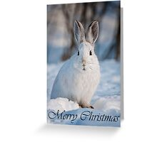 Snowshoe Hare Christmas Card 5 Greeting Card