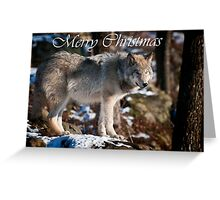 Timber Wolf Christmas Card 1 Greeting Card