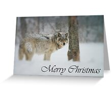 Timber Wolf Christmas Card 5 Greeting Card