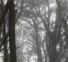 Mt Davidson Trees and Fog by studiojanney