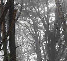 Mt Davidson Trees and Fog by studiojanney