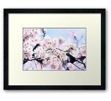 Lovely White Sakura Cherry Blossoms Spring Flowers Framed Print