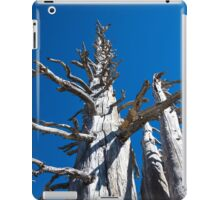 Three Skeletal Trees With Blue Sky iPad Case/Skin