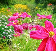 Colorful Cosmos by Owed to Nature