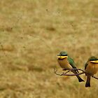 Bee Eaters at Lake Manyara, Tanzania by Hannah Nicholas
