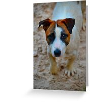 Jack  Greeting Card