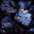 Frosted leaves by Annie Japaud