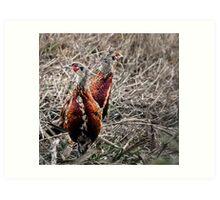 Pheasants. Art Print