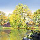 Old Pond by Igor Zenin