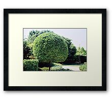 a fine work of topiary Framed Print
