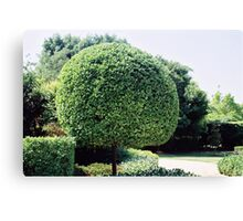 a fine work of topiary Canvas Print