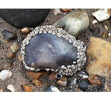 Barnacle Halo Photographic Print