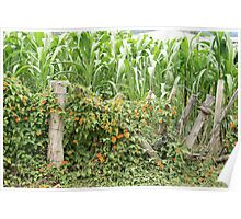 Flower Covered Fence Poster