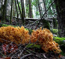 Land Coral ~ Wild Mushroom ~ by Charles & Patricia   Harkins ~ Picture Oregon