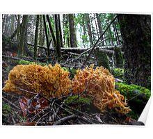 Land Coral ~ Wild Mushroom ~ Poster
