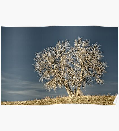 Waiting For Winter On The Colorado Plains Poster