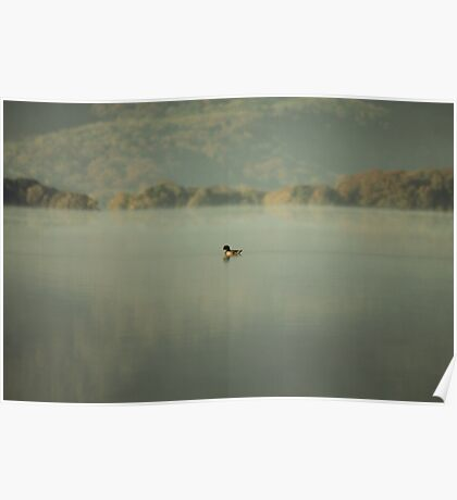 Lonely duck Poster