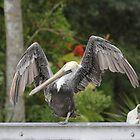 Hokey Pokey Pelican by Susan Littlefield