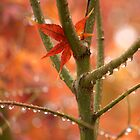 Just One Leaf by Diana Graves Photography