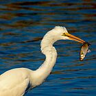 Egret Get His Dinner by imagetj