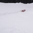 Winnie's Winterland Walk by CWCards2013