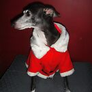 Jolly Red Greyhound by CWCards2013