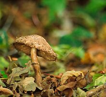 Fungi in the woods by barrylee