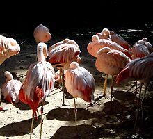 Flamingo Siesta by WildestArt