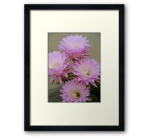 Cactus Blossoms In Bloom Framed Print