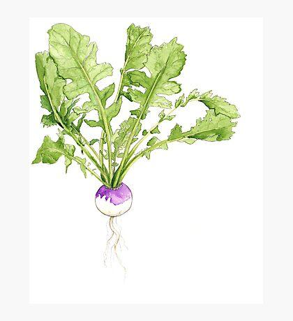 Garden Series - Turnip Photographic Print