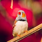 Zebra Finch Pink Background by PatiDesigns