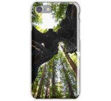 Redwood Trees and Trunk iPhone Case/Skin