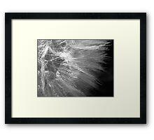 Feathery II Framed Print