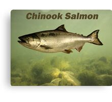 Chinook Salmon Canvas Print