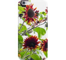 Multiple Red Sunflowers iPhone Case/Skin