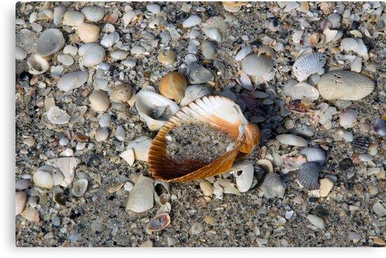 On the Beach  by John  Kapusta