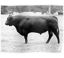 Oh, Bull! Poster