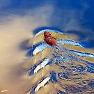 MUSKRAT LOVE. by CHRIS RALKO