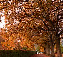 Fall Corridor by Marquesue