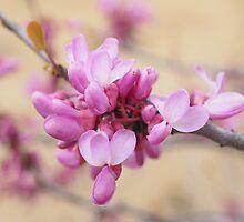 Lovely Cherry Magnolia theme by Lucie Rovná