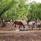 Horses Drinking by Mark Ingram
