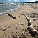 Driftwood Logs. by Billlee