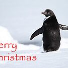 Merry Christmas from Antarctica by DianaC