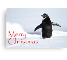 Merry Christmas from Antarctica Canvas Print