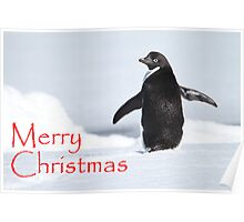 Merry Christmas from Antarctica Poster