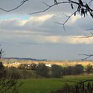 November on a Sunny Day by TrendleEllwood