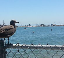 Solitary Seagull in Belmont Shore by Matthew Nickle